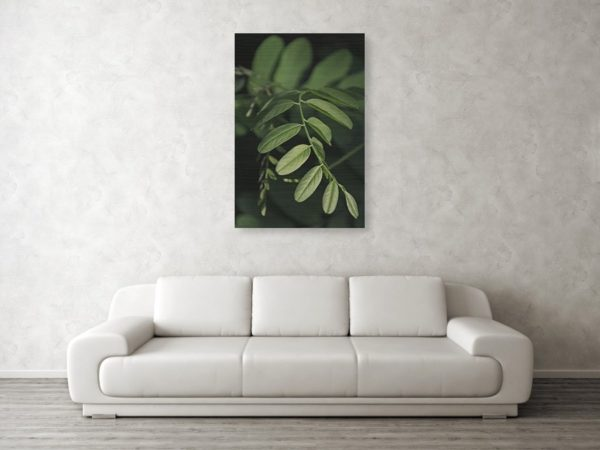 Zlatý poměr v přírodě - Minimalistický fotoobraz na stěnu