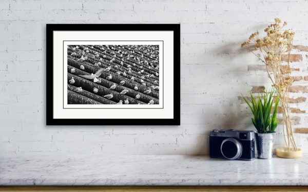 Framed print 30x20 cm, two inches mat and 0.5 inches bottom mat. Black wooden frame in Satin Finish style. Printed on luster photo paper with original aspect ratio of the photography.