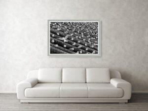 Racci na ledolamu u Karlova mostu v Praze - Černobílý fotoobraz
