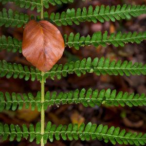 Symetrie v přírodě jako fotoobraz