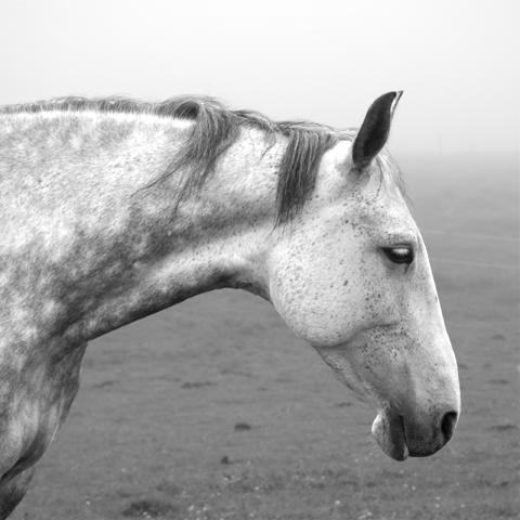 Kůň - fotograf Thierry Salmon