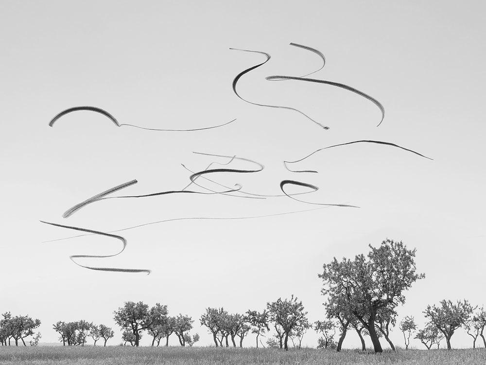 Ptáci letící nad stromy na fotografii od Xavi Bou