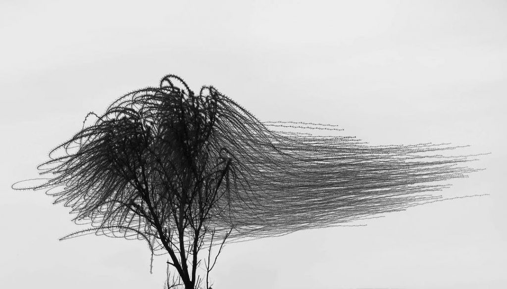 Hejno ptáků - Xavi Bou