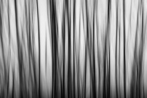 Abstraktní strom - Černobílý minimalistický fotoobraz na stěnu