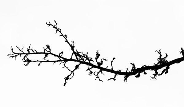 Krásná větev - Černobílý minimalistický fotoobraz na stěnu