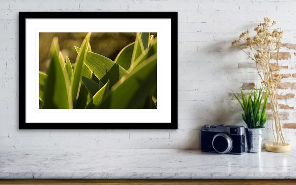 Tulip Leaves - Art Photography Visualization