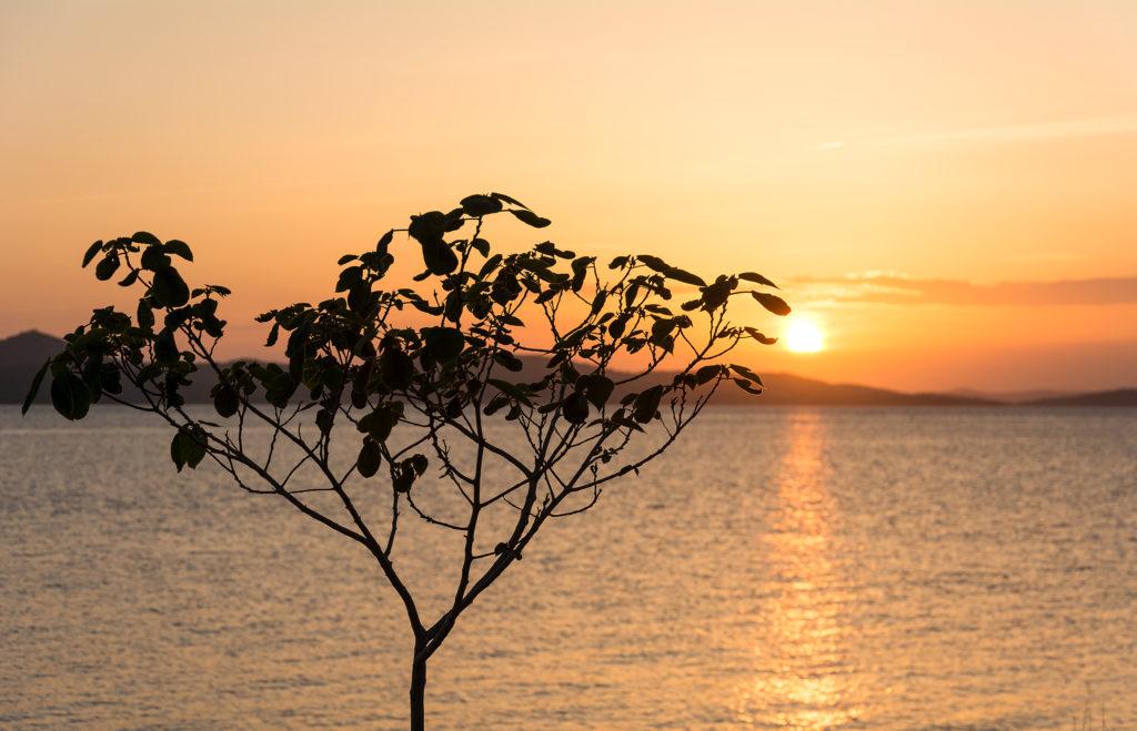 Západ slunce nad mořem se stromem v popředí.