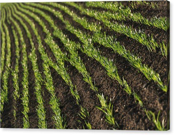 Zelené linie na poli - Minimalistický fotoobraz - tisk na plátně