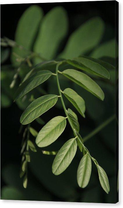 Listy - Minimalistický fotoobraz na plátně