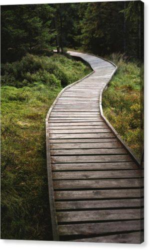 """Minimalistický fotoobraz """"Cesta v lese"""" na plátně"""