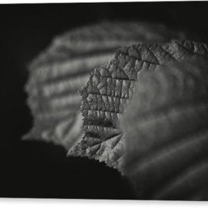 """Minimalistický černobílý fotoobraz """"Tři listy"""" na plátně"""