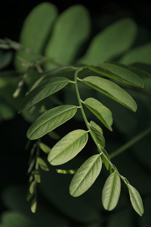 Listy - Minimalistický fotoobraz