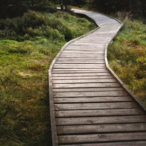 """Minimalistický fotoobraz """"Cesta v lese"""""""