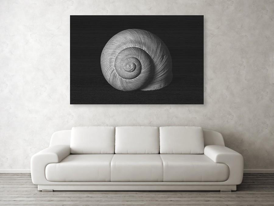 Vizualizace obrovské černobílé fotografie šnečí ulity na javorové desce o velikosti 152 x 102 cm na stěně obývacího pokoje.